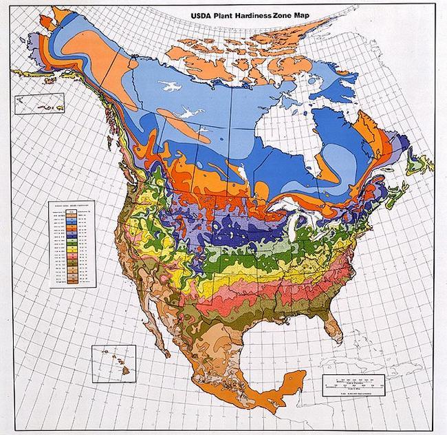 USDA_Plant_Hardiness_Zone_Map_Nordamerika.bmp.jpg