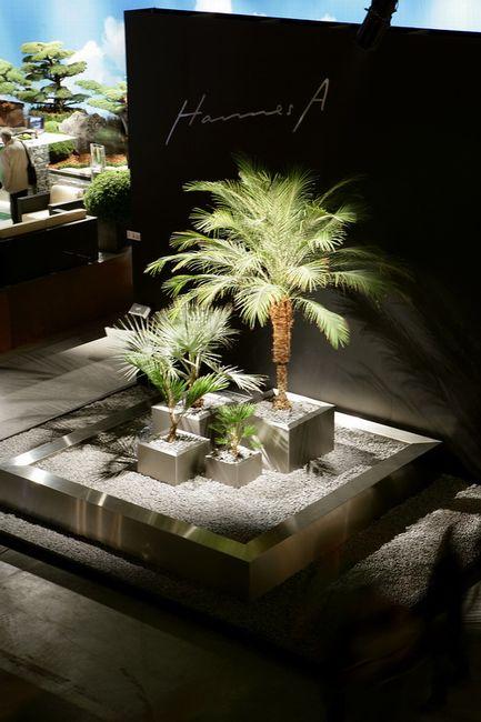 palmen f r die bepflanzung im garten oder wintergarten sowie palmen f r die gartenplanung und. Black Bedroom Furniture Sets. Home Design Ideas